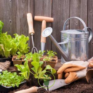 graines-de-legumes-pour-votre-jardin-potager-facile-8-varietes